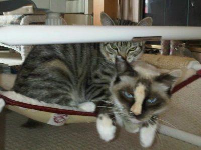 Indoor Raised Cat Bed