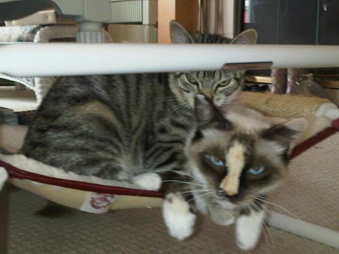 Indoor Cozy Feline Cabin