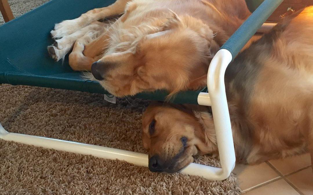 Indoor Raised Pet Cot by Roverpet.com