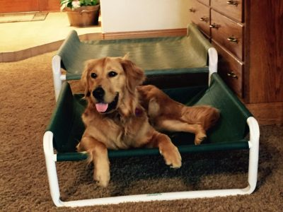 Indoor Raised Pet Cot