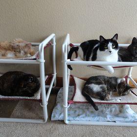 Indoor Cozy Cat Cabin